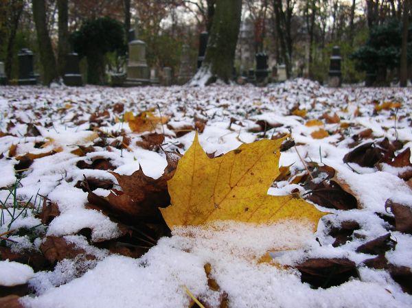 Schnee im Friedhof