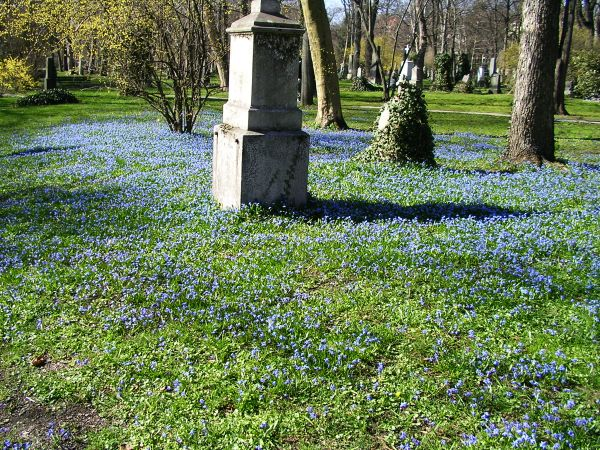 Blumenteppich mit Blaustern