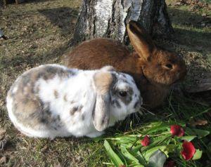 Kaninchen halten