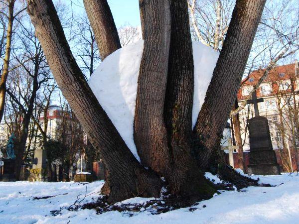 Schneewand - Landart von Christina Wenderoth
