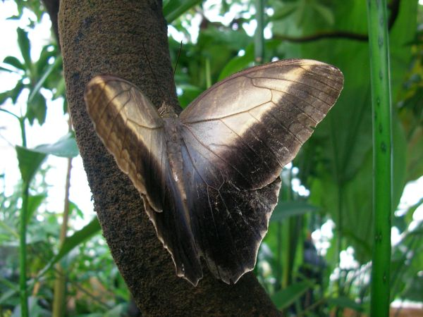 Schmetterling an Baumstamm