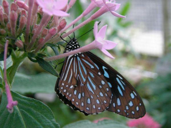 Schmetterling an Blüten