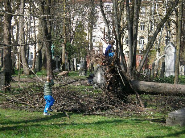 ungestürzter Baum im Alten Friedhof