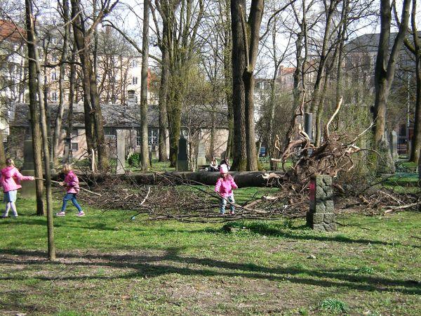 umgestürzter Baum mit spielenden Mädchen