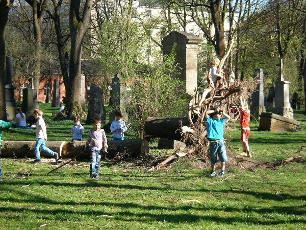 zerlegter Baum im Friedhof