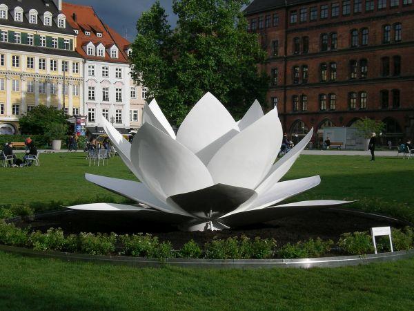 Lotusblüte im Marienhof