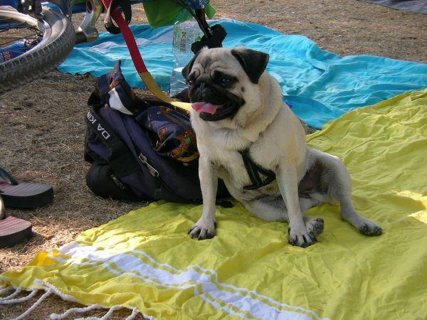 Hund im Englischen Garten