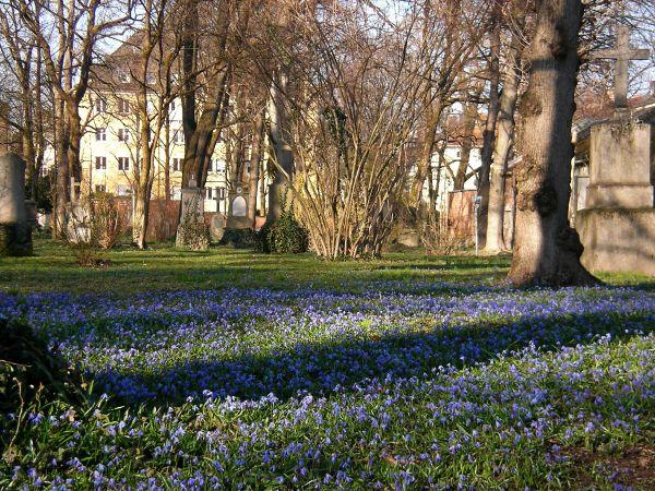 Blaustern im Alten Friedhof