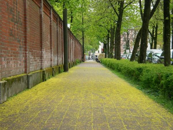Gehwegpflaster Zieblandstraße