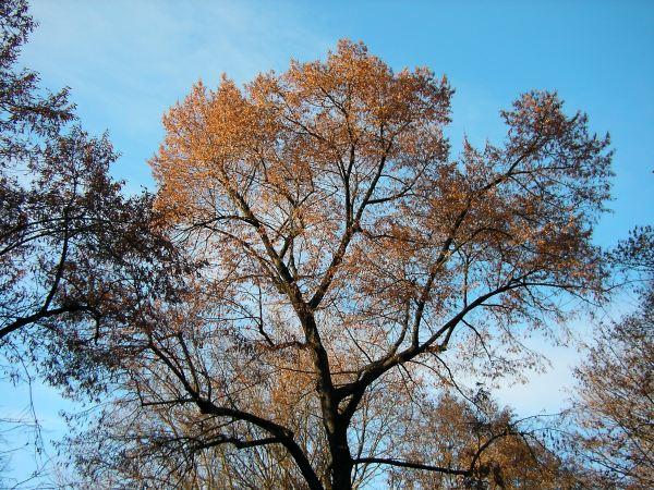 Baumkrone vor blauem Himmel