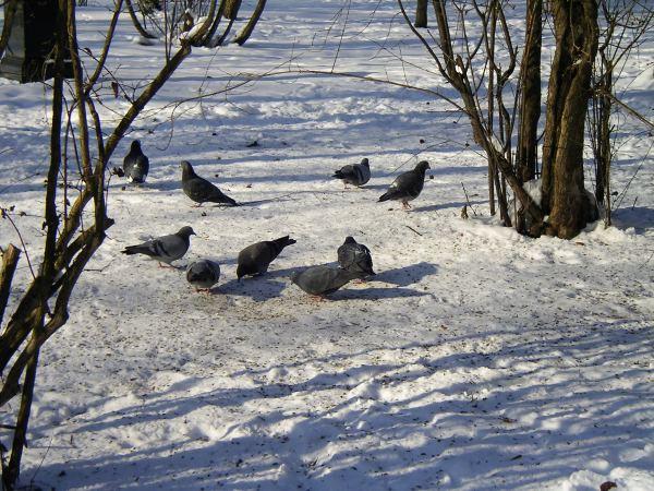Tauben unterm Futterhäuschen