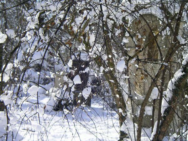 verschneite Sträucher im Friedhof