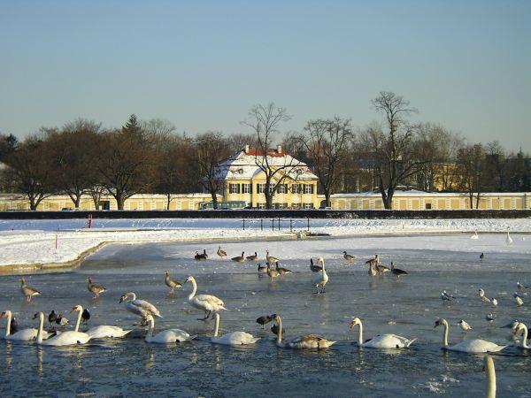 Schwäne im Wasserbecken, Nymphenburg