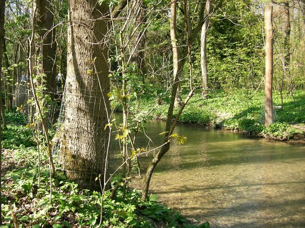 Bäume am Ufer mit Drahtmantel