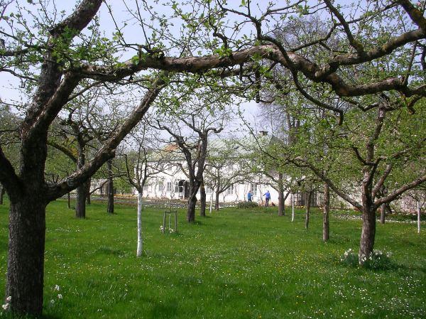 Obstwiese im Dachauer Schlossgarten