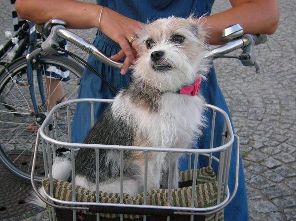 Hund im Korb bei Critical Mass